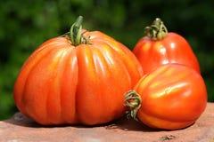 Natura morta con i grandi pomodori arancio Immagini Stock Libere da Diritti