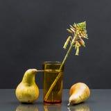 Natura morta con il fiore di vera dell'aloe in bicchiere d'acqua e pere Immagini Stock