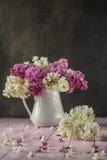 Natura morta con il lillà porpora e bianco in vaso bianco sulla tavola rosa, macro, pianta di fioritura della molla con i petali fotografia stock