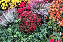 Natura morta con il lotto di bei mazzi variopinti del fiore Fotografia Stock Libera da Diritti