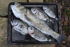 Natura morta con il pesce Fotografia Stock Libera da Diritti
