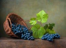 Natura morta con l'uva su un canestro Fotografie Stock Libere da Diritti