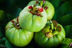 Natura morta con la Cambogia fresca di garcinia su fondo di legno (Th Fotografia Stock