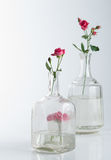 Natura morta con le rose su bianco Fotografie Stock