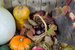 Natura morta con le varie zucche, il canestro di vimini riempito di Pinecones, le ghiande, le castagne e Autumn Leaves su un fien Fotografie Stock Libere da Diritti