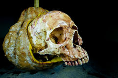 Natura morta con un cranio Immagine Stock Libera da Diritti