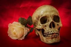 Natura morta con un cranio umano con una rosa falsa di bianco Fotografia Stock