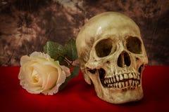 Natura morta con un cranio umano con una rosa falsa di bianco Immagine Stock Libera da Diritti