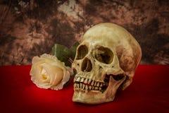 Natura morta con un cranio umano con una rosa falsa di bianco Immagini Stock Libere da Diritti