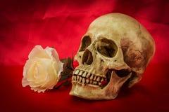 Natura morta con un cranio umano con una rosa falsa di bianco Fotografie Stock Libere da Diritti