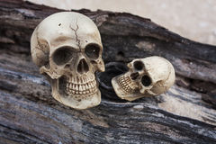 Natura morta del cranio o umana Immagine Stock