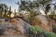 Natura morta del deserto dell'Arizona Fotografie Stock Libere da Diritti