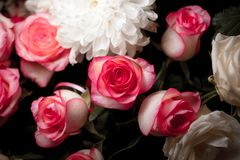 Natura morta del fiore rosa del mazzo Belle rose rosa fresche Rose Posy Wedding Bouquet fotografie stock libere da diritti