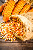 Natura morta del mais di seme e del cereale secco Fotografie Stock Libere da Diritti