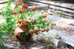 Natura morta del mazzo dei Wildflowers Fotografia Stock
