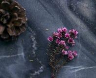 Natura morta delicata Fotografia Stock Libera da Diritti