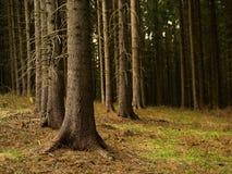 Natura morta della foresta Fotografia Stock