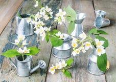 Natura morta della primavera con i fiori bianchi immagine stock