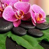 Natura morta della stazione termale del ramoscello di fioritura dell'orchidea viola spogliata Immagini Stock Libere da Diritti