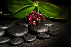 Natura morta della stazione termale di bello fiore rosso-acceso dell'orchidea, phalaenop Immagine Stock Libera da Diritti