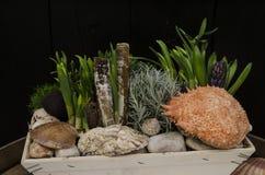 Natura morta delle conchiglie e della pianta Immagini Stock