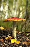 Natura morta di autunno Fotografia Stock
