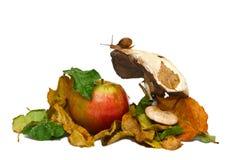Natura morta di autunno Immagini Stock