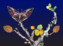 Natura morta di autunno con i wi neri dell'albero e della farfalla Fotografia Stock