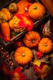 Natura morta di autunno con le zucche Fotografia Stock Libera da Diritti