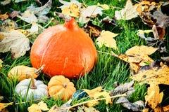 Natura morta di autunno con le zucche e le foglie di caduta in giardino soleggiato Fotografia Stock