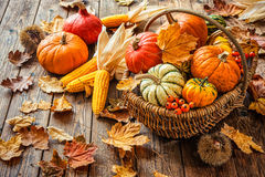 Natura morta di autunno con le zucche, le pannocchie e le foglie Fotografie Stock Libere da Diritti