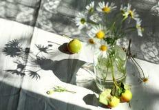 Natura morta di mattina con la bottiglia e le ombre Fotografia Stock