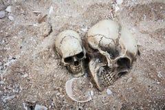 Natura morta ed annata dell'essere umano del cranio Fotografie Stock