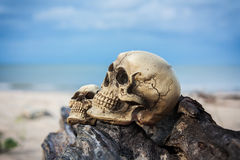 Natura morta ed annata dell'essere umano del cranio su legname Fotografia Stock