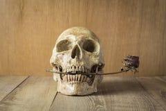 Natura morta rosa della bruciatura e del cranio su fondo di legno Immagini Stock Libere da Diritti