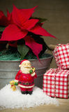 Natura morta rossa del fiore della stella di Natale Fotografia Stock