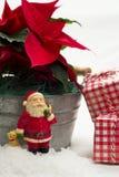 Natura morta rossa del fiore della stella di Natale Fotografia Stock Libera da Diritti