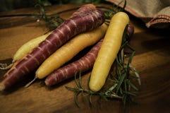 Natura morta sana organica delle carote del raccolto del giardino Fotografia Stock