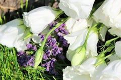 Natura morta variopinta con le rose su erba verde Immagini Stock Libere da Diritti