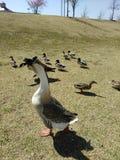 Natura na jeziorze obraz royalty free