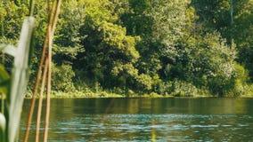 Natura na rzece, Zielona roślinność na bankach rzeka zbiory wideo