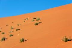 Natura Namib pustynia, Afryka Fotografia Stock