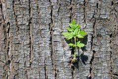 Natura nata Immagini Stock Libere da Diritti