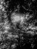 Natura nei colori leggeri e scuri fotografia stock