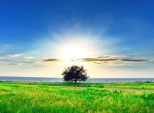Natura nel tramonto Fotografia Stock