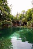Natura nel verde Fotografia Stock