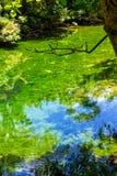 Natura nell'armonia Fotografia Stock