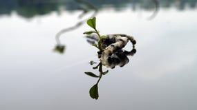 Natura nell'illusione Immagini Stock Libere da Diritti