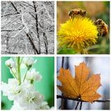 Natura nell'inverno, nella primavera, nell'estate e nell'autunno. Collage. Fotografia Stock