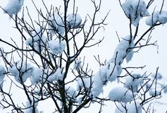 Natura nell'inverno nevoso Immagine Stock